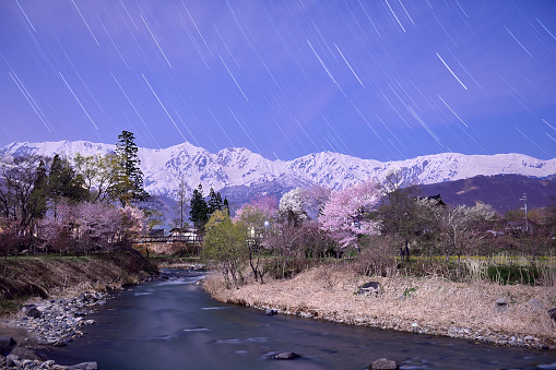 夜桜「Starry Night」:スマホ壁紙(16)