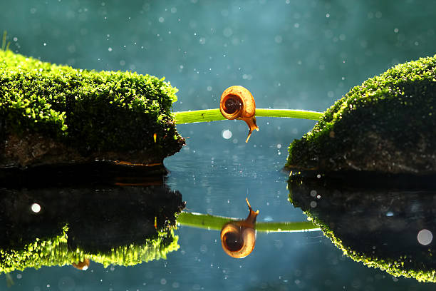 Snail and its reflection:スマホ壁紙(壁紙.com)