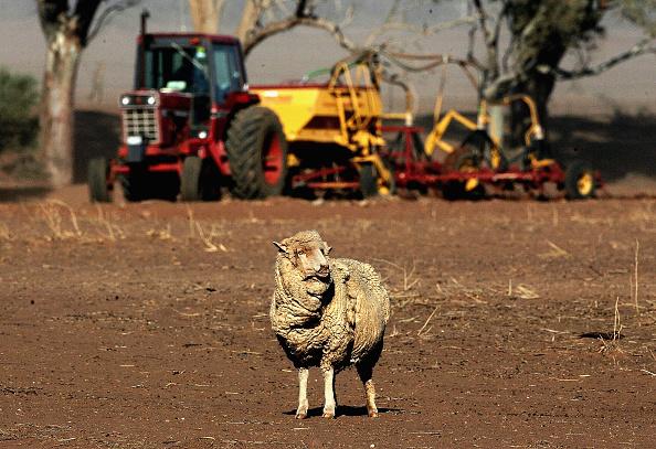 South Australia「Farmers Rush To Plant Crops Before Next Rains In Port Augusta」:写真・画像(11)[壁紙.com]