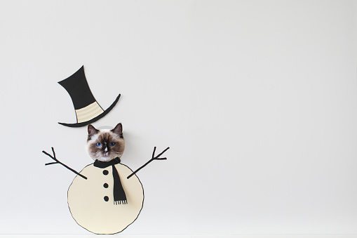 純血種のネコ「Ragdoll cat peeking through snowman face cut-out board」:スマホ壁紙(17)