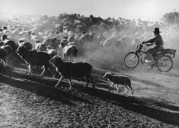 Agriculture「Motorized Shepherding」:写真・画像(7)[壁紙.com]