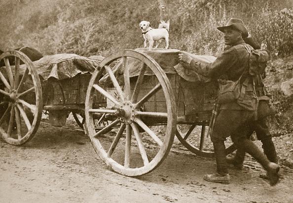 キャラクター「Australian Troops Returning From The Trenches With Their Mascot World War I France 1916」:写真・画像(12)[壁紙.com]