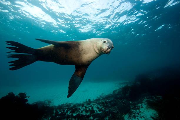 Australian Sea Lions, Hopkins Island:スマホ壁紙(壁紙.com)