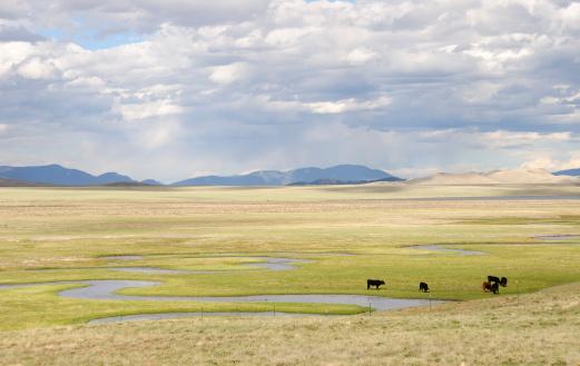 Cattle「コロラドの風景」:スマホ壁紙(19)