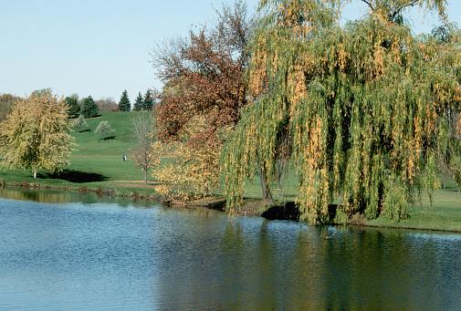 Water Hazard「Weeping Willows at Golf Course」:スマホ壁紙(1)
