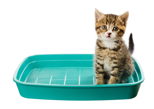 Kitten「猫用トイレ」:スマホ壁紙(0)
