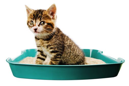 Litter Box「kitten toilet」:スマホ壁紙(6)