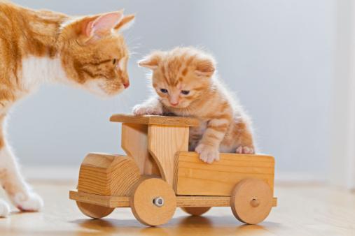 子猫「Germany, Cat looking at kitten sitting on wooden toy」:スマホ壁紙(16)