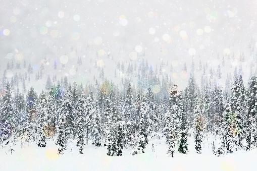 雪「Snow storm above a winter pine forest」:スマホ壁紙(18)