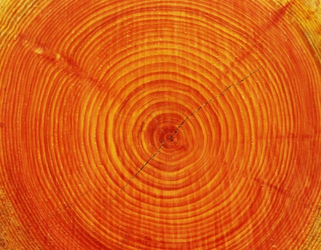 Tree Ring「Photography of annual rings of Japanese cypress, Close Up」:スマホ壁紙(17)