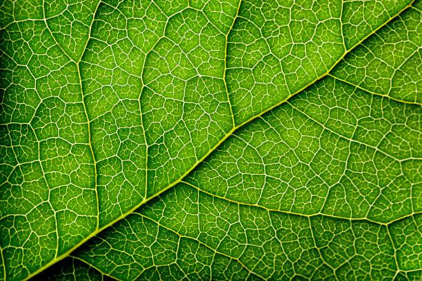 Leaves Series:スマホ壁紙(壁紙.com)