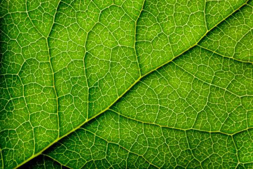 Botany「Leaves Series」:スマホ壁紙(13)