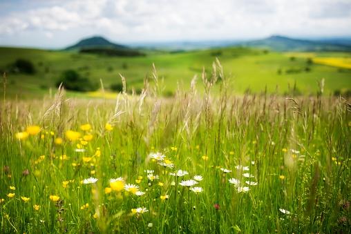 花畑「Germany, Constance district, landscape at springtime」:スマホ壁紙(12)