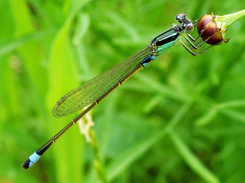 とんぼ「Dragonfly on flower」:スマホ壁紙(12)