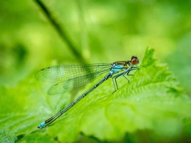 Dragonfly on a leaf, Bulgaria:スマホ壁紙(壁紙.com)