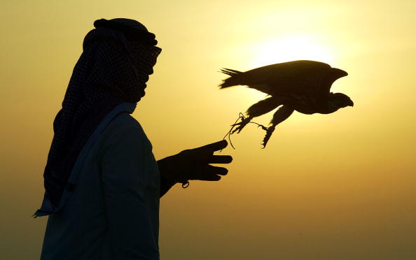 Hawk - Bird「Training Falcons To Hunt In Bahrain」:写真・画像(13)[壁紙.com]