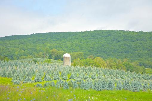 落葉樹「Silo and tree farm, Hillsdale, NY」:スマホ壁紙(11)