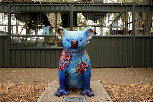 Nathan Edwards「Koala Hospital Works To Save Injured Animals Following Bushfires Across Eastern Australia」:写真・画像(17)[壁紙.com]