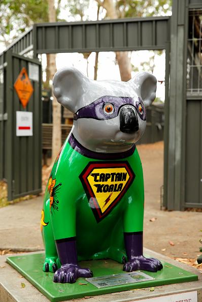 Nathan Edwards「Koala Hospital Works To Save Injured Animals Following Bushfires Across Eastern Australia」:写真・画像(15)[壁紙.com]