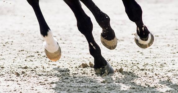 セレクティブフォーカス「馬繋駕速歩レースの足」:スマホ壁紙(7)