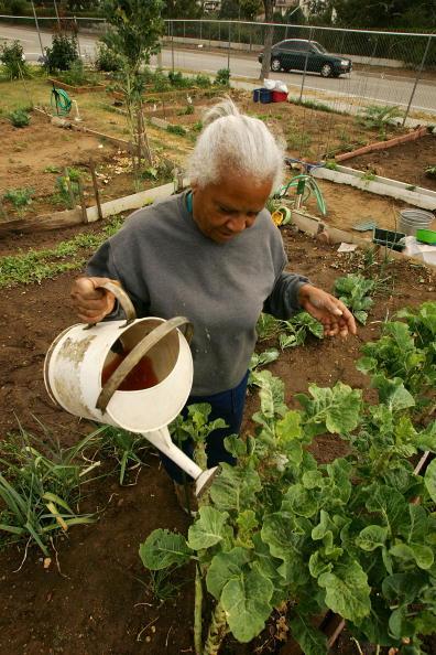 David McNew「Soaring Food Prices Prompt Renewed Interest In Gardening」:写真・画像(16)[壁紙.com]