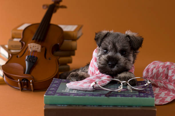Miniature Schnauzer Puppy and Art:スマホ壁紙(壁紙.com)