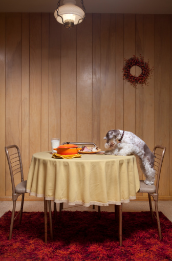Eating「Miniature schnauzer standing on chair at table」:スマホ壁紙(7)