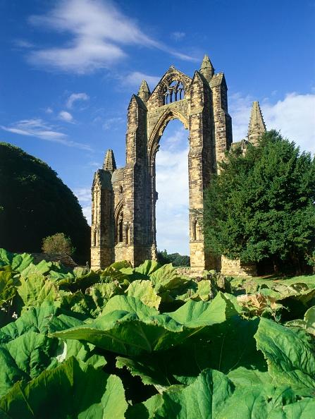 葉・植物「Gisborough Priory」:写真・画像(1)[壁紙.com]