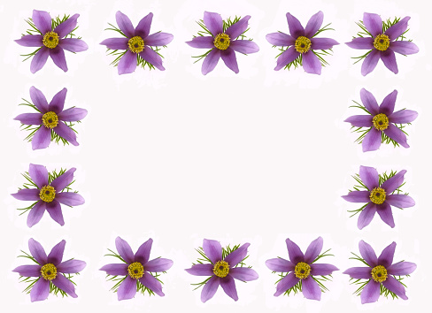 Stamen「Frame of purple pasque flowers around copy space.」:スマホ壁紙(13)