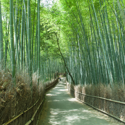 Bamboo Grove「Japanese giant bamboo forest path, Kyoto」:スマホ壁紙(11)