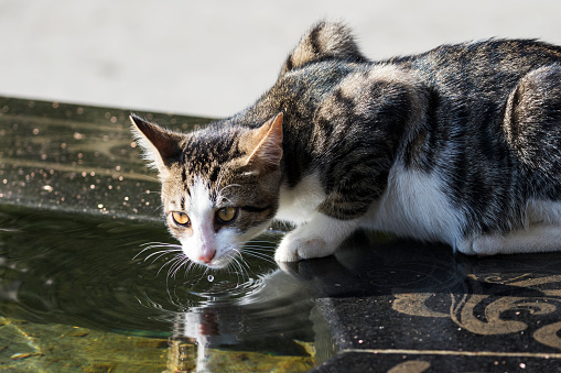 Crouching「Cat drinking from a fountain」:スマホ壁紙(15)