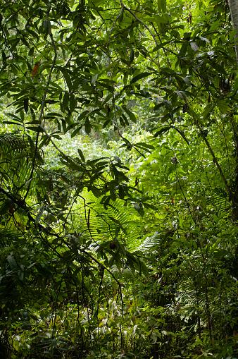 Amazon Rainforest「Thick, lush and green Amazon forest」:スマホ壁紙(3)