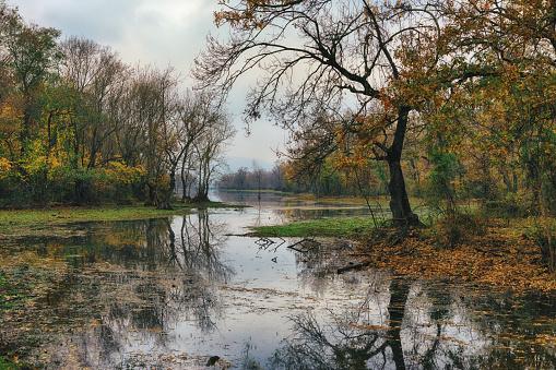 The Nature Conservancy「Bursa, Karacabey Floodplain (Longoz) Forest」:スマホ壁紙(12)