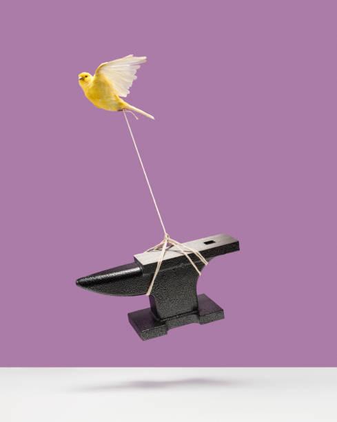 Canary carrying an anvil:スマホ壁紙(壁紙.com)