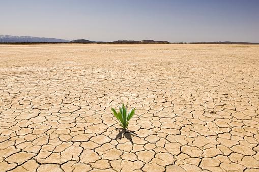 Lake Bed「Green plant growing from cracked dry soil in desert landscape」:スマホ壁紙(11)