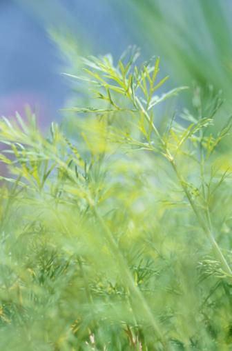 Frond「Green plant」:スマホ壁紙(17)