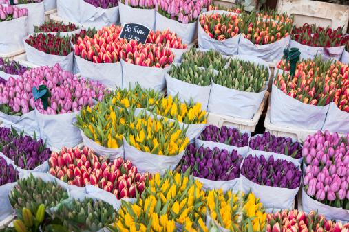 Amsterdam「flowers market. amsterdam」:スマホ壁紙(10)