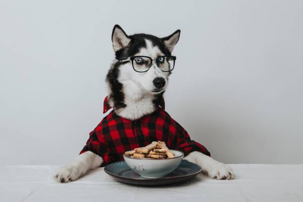 learned dog:スマホ壁紙(壁紙.com)