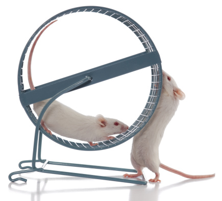 Sports Training「Mouse Boss Always Wants Exercise Wheel to Spin Faster」:スマホ壁紙(7)