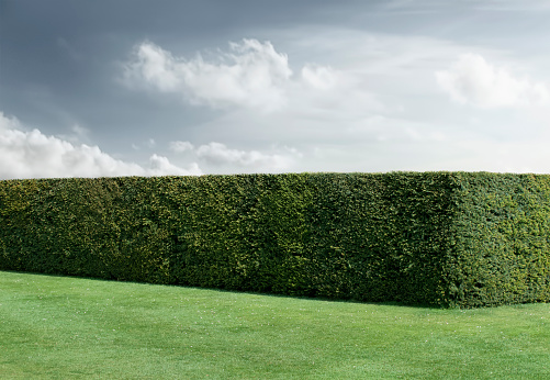 Hedge「Neatly trimmed hedges and lawn under cloudy sky」:スマホ壁紙(13)