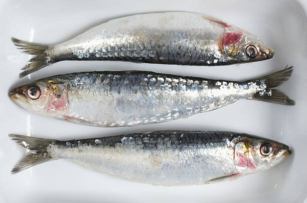Fresh Sardines, elevated view:スマホ壁紙(壁紙.com)