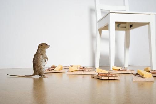 Rat「Rat and mousetraps」:スマホ壁紙(17)