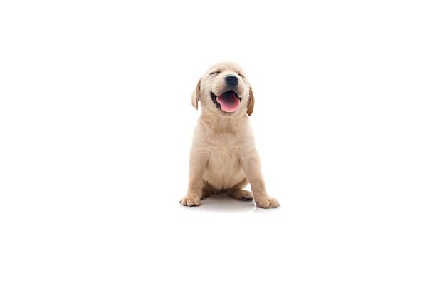 happy dog:スマホ壁紙(壁紙.com)