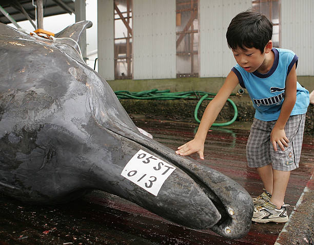 Japan's Pro-Whaling Stance Draws Allegations Of Vote-Buying:ニュース(壁紙.com)