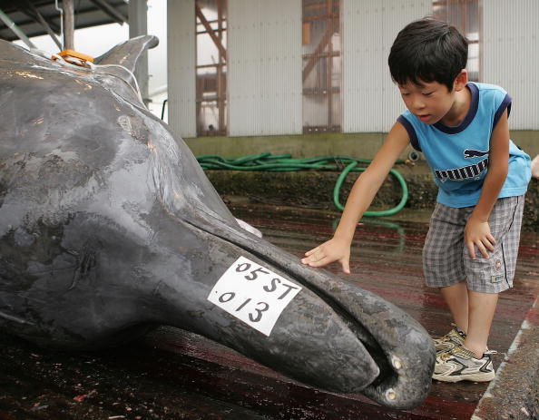 Japan「Japan's Pro-Whaling Stance Draws Allegations Of Vote-Buying」:写真・画像(15)[壁紙.com]