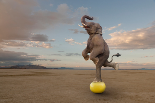 Standing「Skilled Elephant Balancing On A Ball」:スマホ壁紙(13)