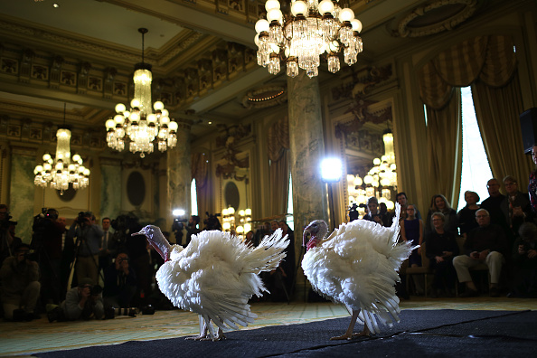 Carrot「National Thanksgiving Turkeys Meet The Press Before Official Presidential Pardon」:写真・画像(17)[壁紙.com]