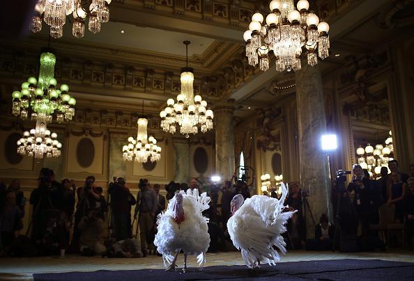 ニンジン「National Thanksgiving Turkeys Meet The Press Before Official Presidential Pardon」:写真・画像(6)[壁紙.com]