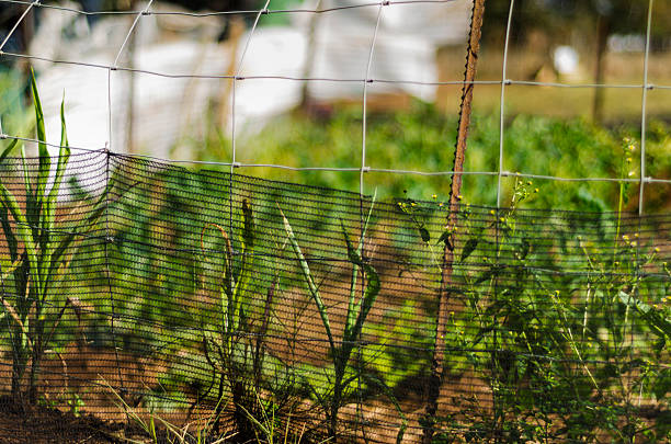 Vegetable / herb garden in an informal settlement, Hartbeespoort, North West Province.:スマホ壁紙(壁紙.com)