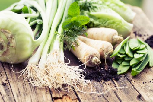 Kohlrabi「vegetable harvest freshness from garden」:スマホ壁紙(1)